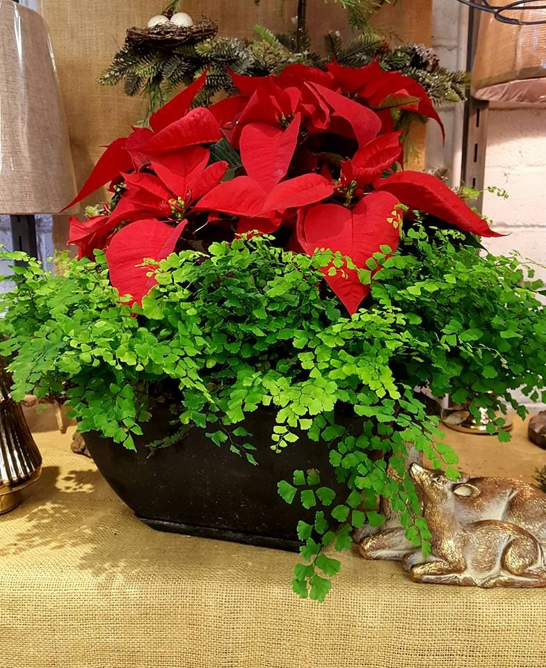 A Fresh Centerpiece For Your Christmas Decor.