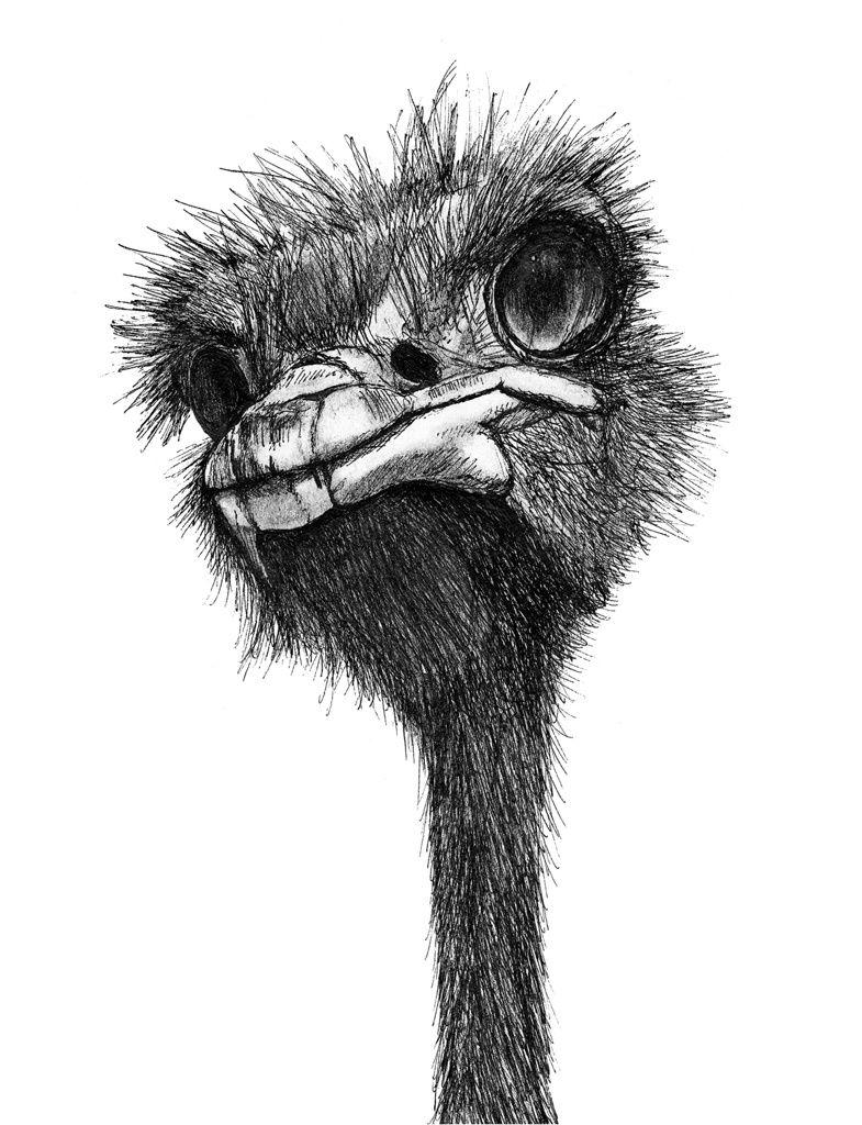 техника, картинка страуса мультяшного пошагово почему реки