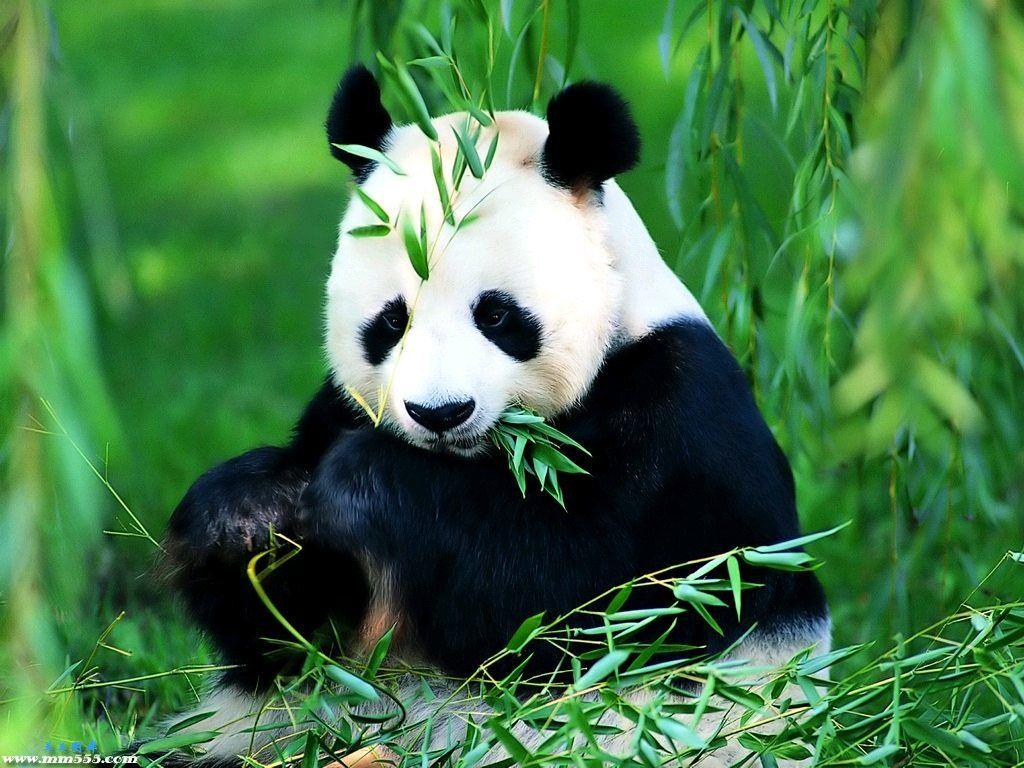 Картинки по запросу zoo beijing site:pinterest.com