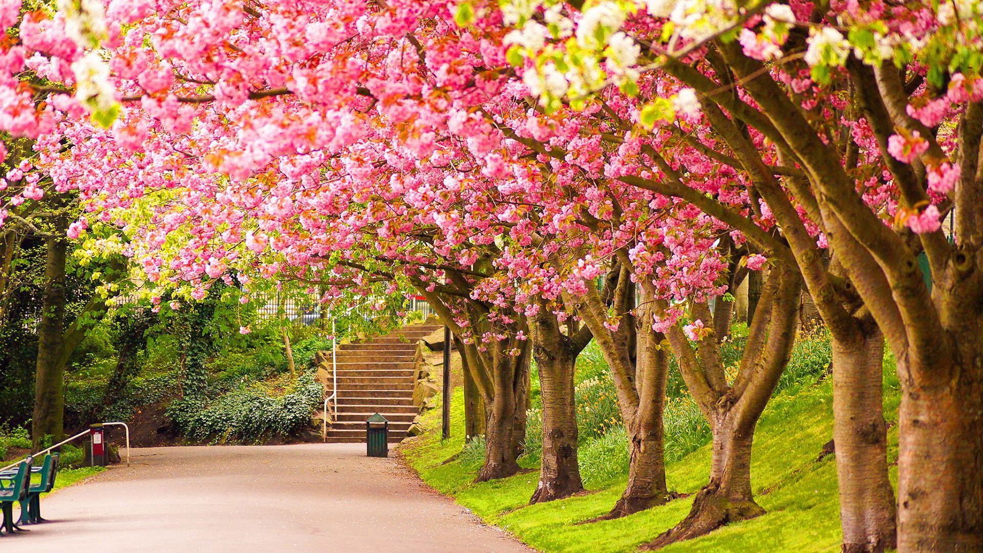 10 Hd Nature Wallpapers With 1920 1080 Pixels 2 Pink Blossoms Nature Desktop Wallpaper Nature Desktop Beautiful Nature Wallpaper