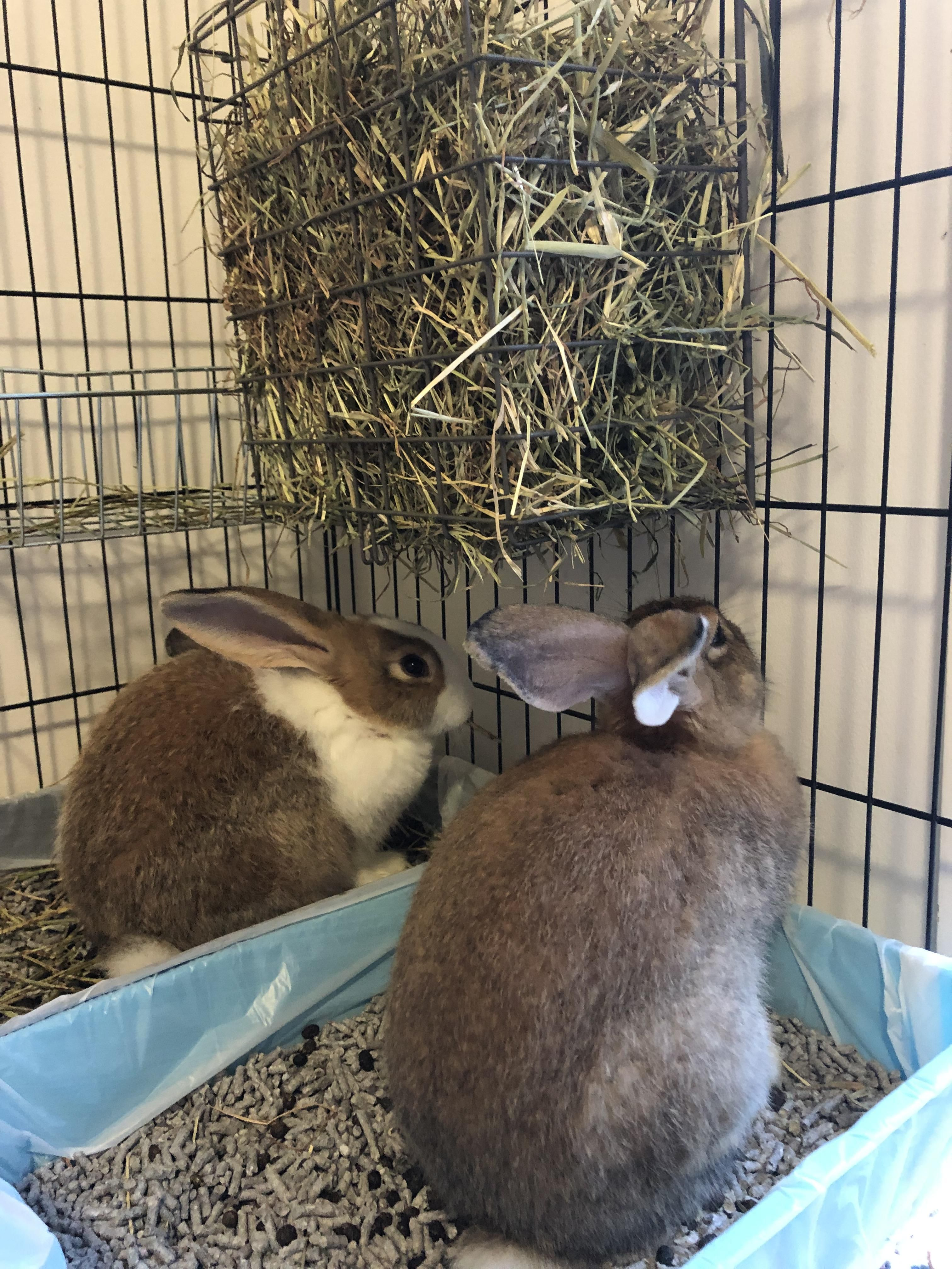 Rabbit training with images cute bunny pictures rabbit