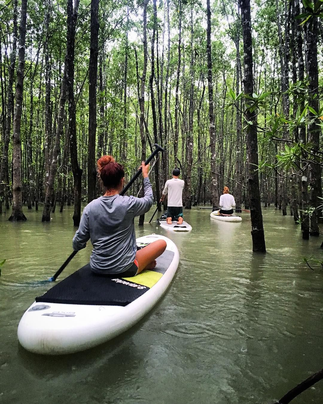 Pin By Iffah Fathin On Style: Paddle Boarding Through The Mangroves This Morning