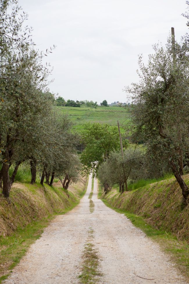 food and lifestyle photography workshop in Vinci.~~Olive groves at Agriturismo Cantagrillo