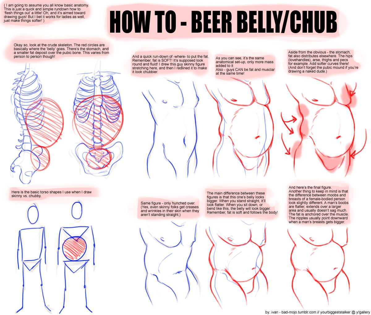 Enchanting Anatomy Of A Beer Belly Adornment Anatomy Ideas