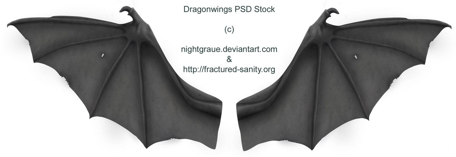 bat dragon wings - Google Search