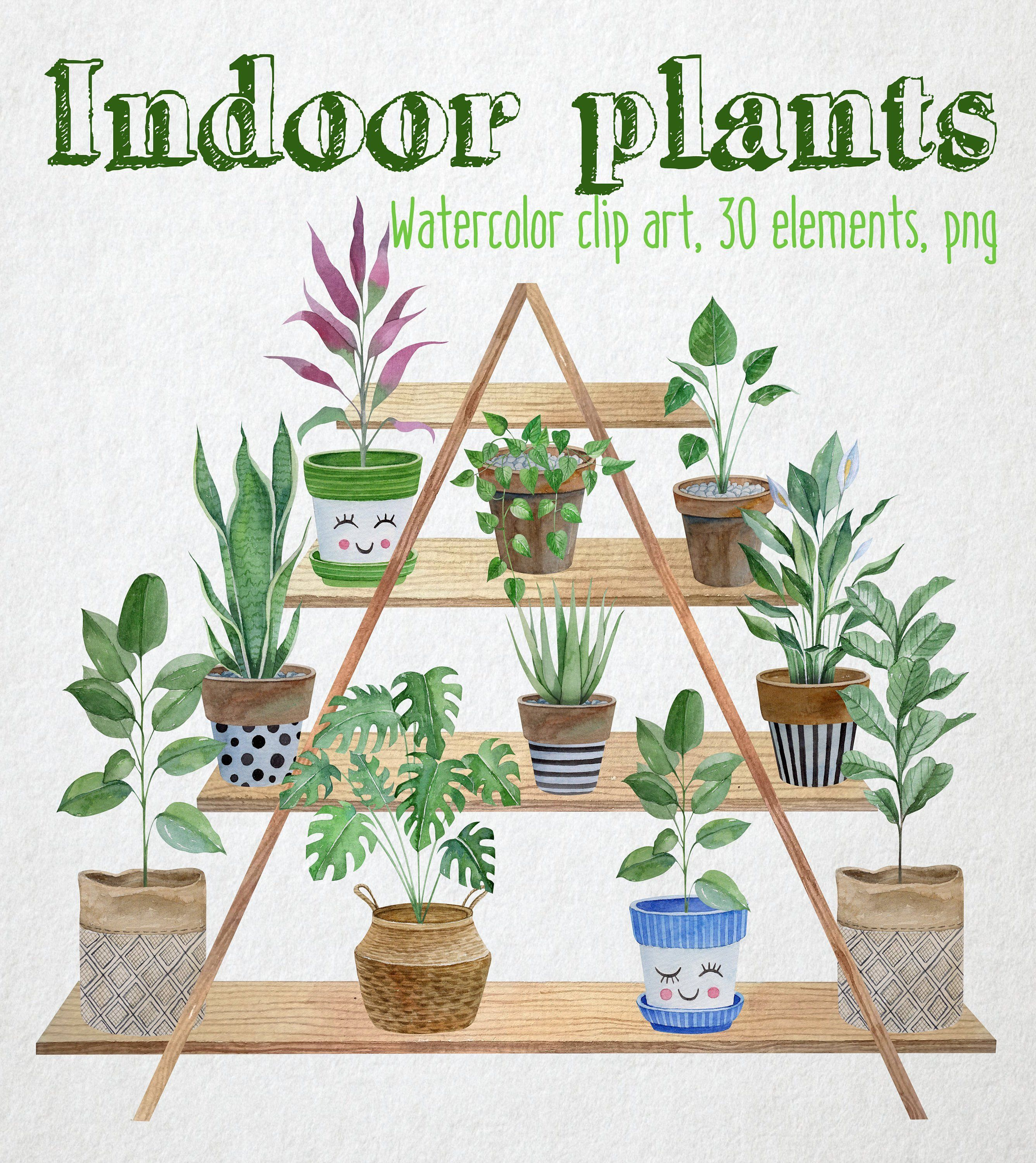 Indoor Plants watercolor clipart. Potted plants illustration. Watercolor house plants in ceramic pots -   17 indoor plants Background ideas