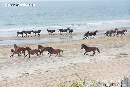 These Wild Horses Live On The Beach For
