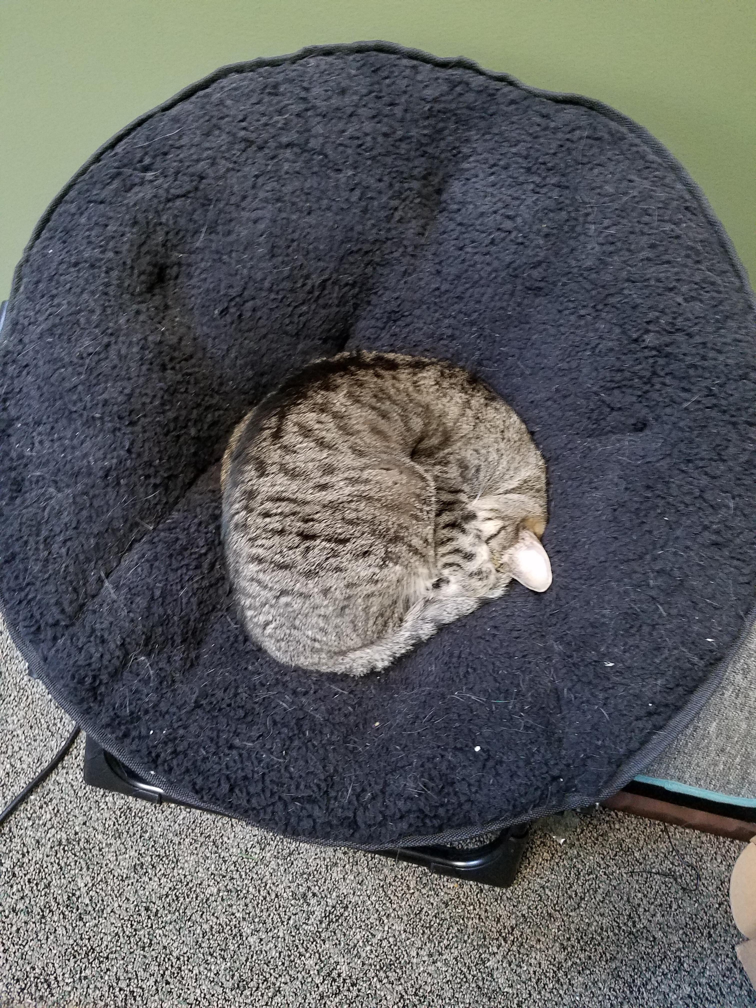 I Bought My Cat A Kid Sized Papasan Chair Http://ift.tt
