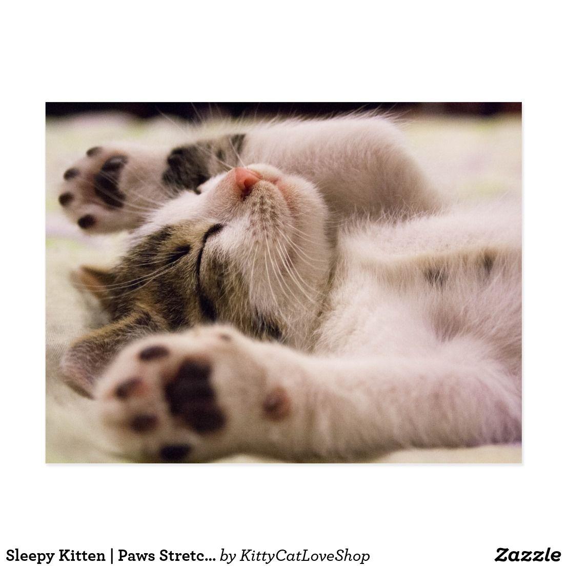 Sleepy Kitten Paws Stretched Out Postcard Zazzle Com Sleepy Kitten Cat Lovers Cat Love
