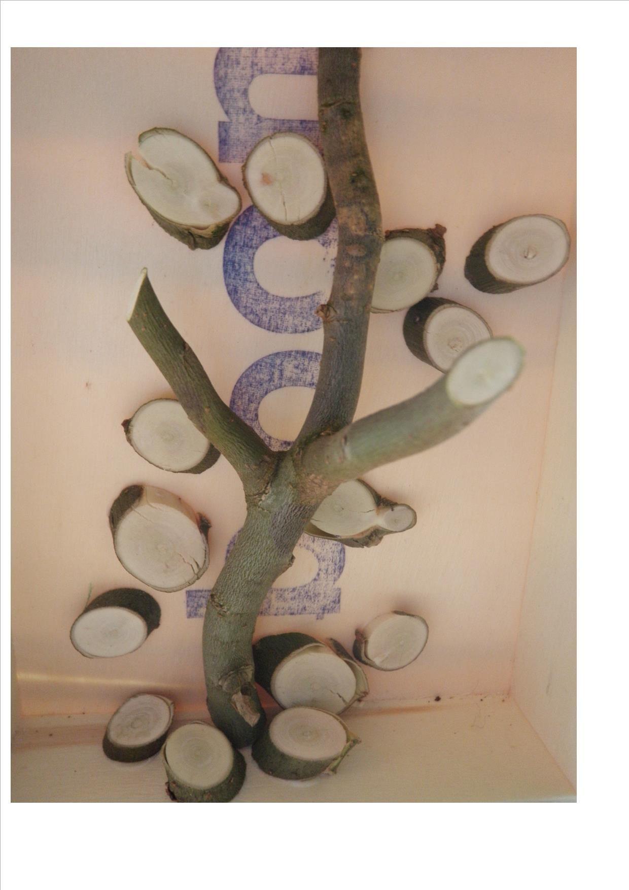 boom van takken en stukjes hout en als achtergrond boom gestempeld