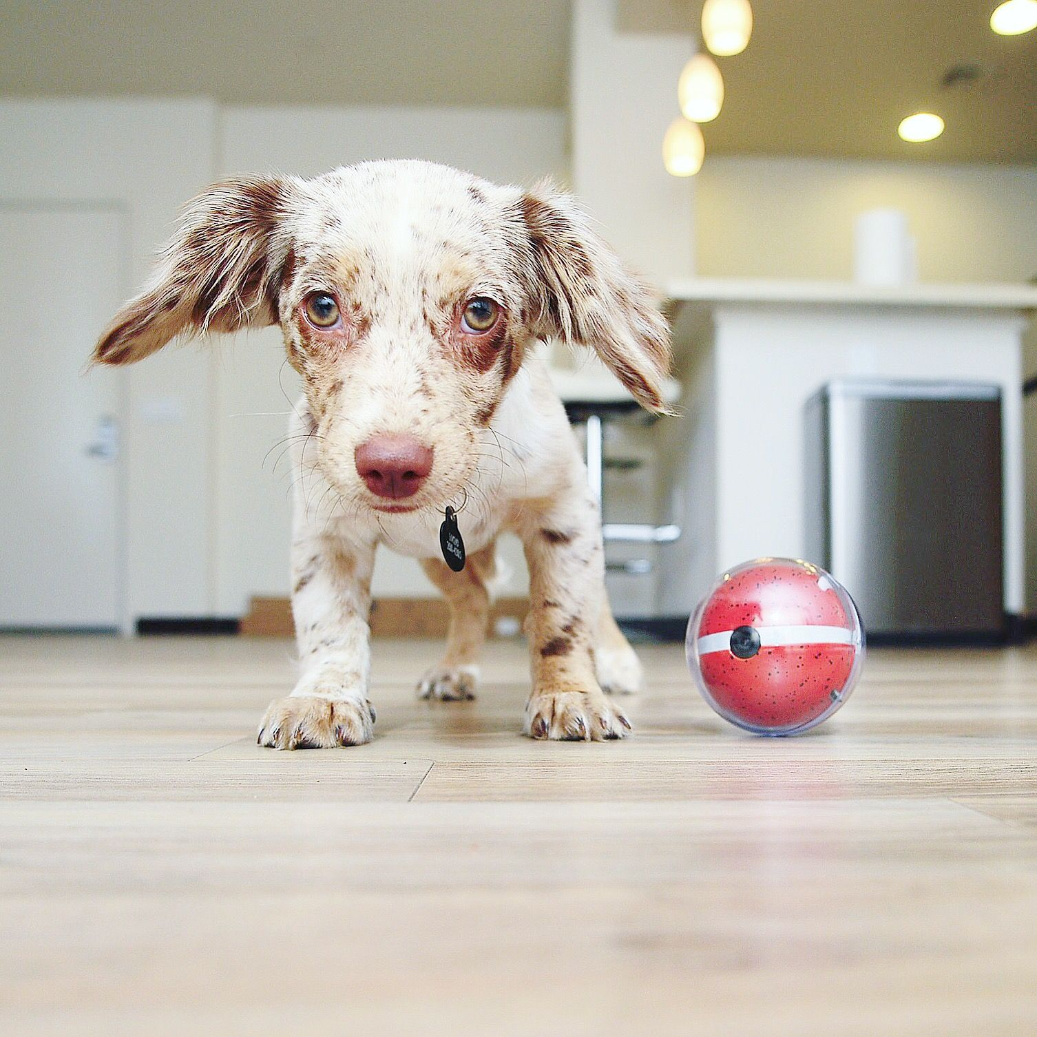 Soythechiweenie Has A New Best Friend Getpebby Dog Toys