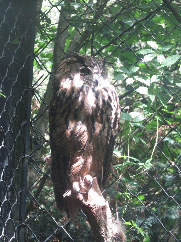 coucou tout le monde, Hier, je vous l'ai dit, nous étions dans le parc de oiseaux... - Le blog de moonette