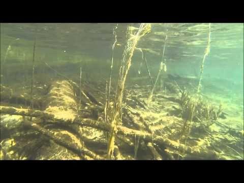 Niukkaravinteinen järvi - YouTube
