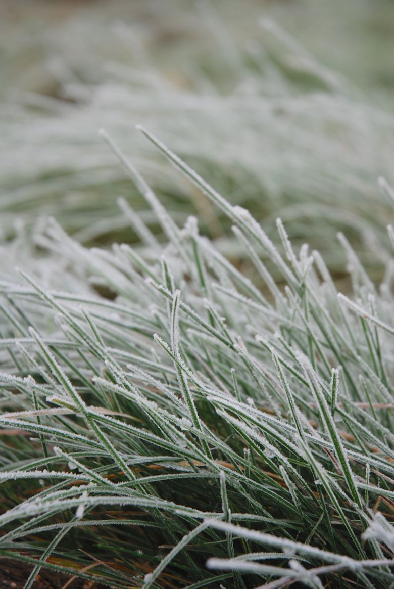 Pingl Par Pale As Snow Sur Mint Chocolate Pinterest Givre  # Palette Jardin De Givre