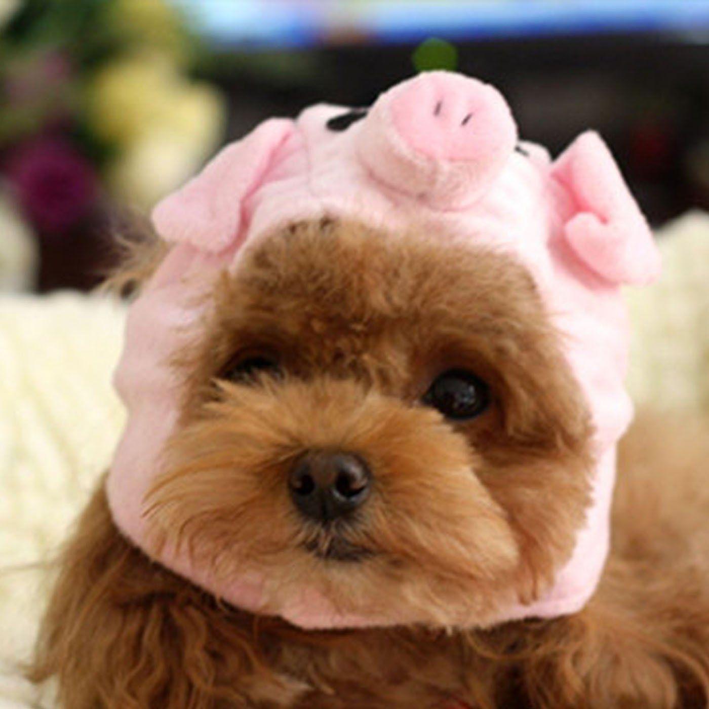 Alfie Pet by Petoga Couture Qeno Pig Hat