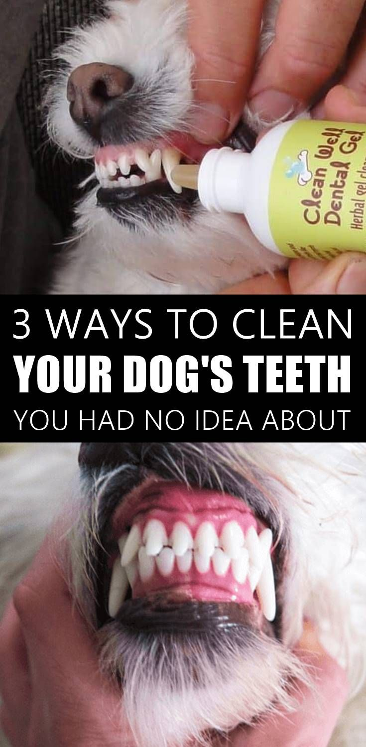 How to Clean Your Dog's Teeth At Home #dentalcare