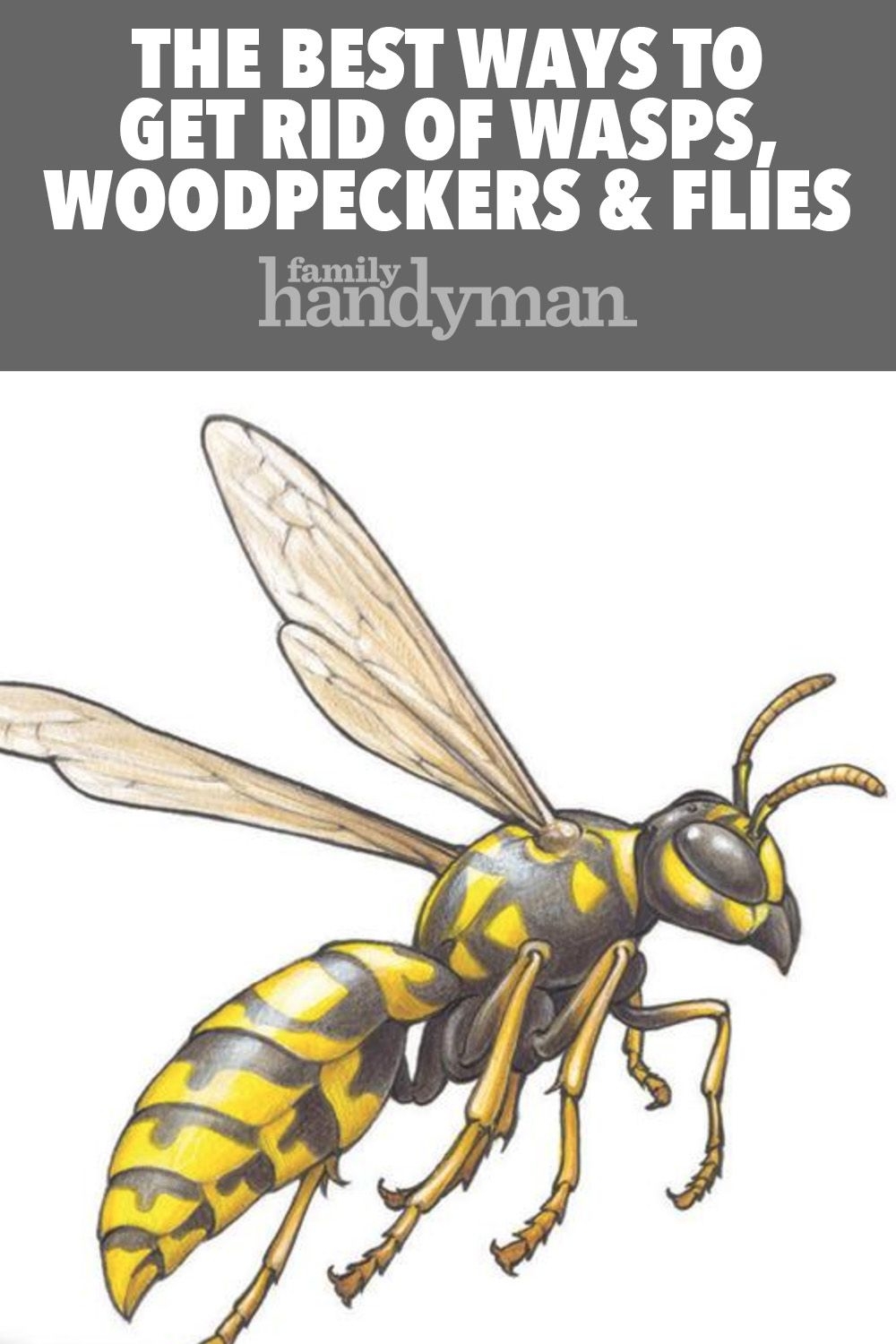 Get rid of wasps woodpeckers and flies get rid of wasps
