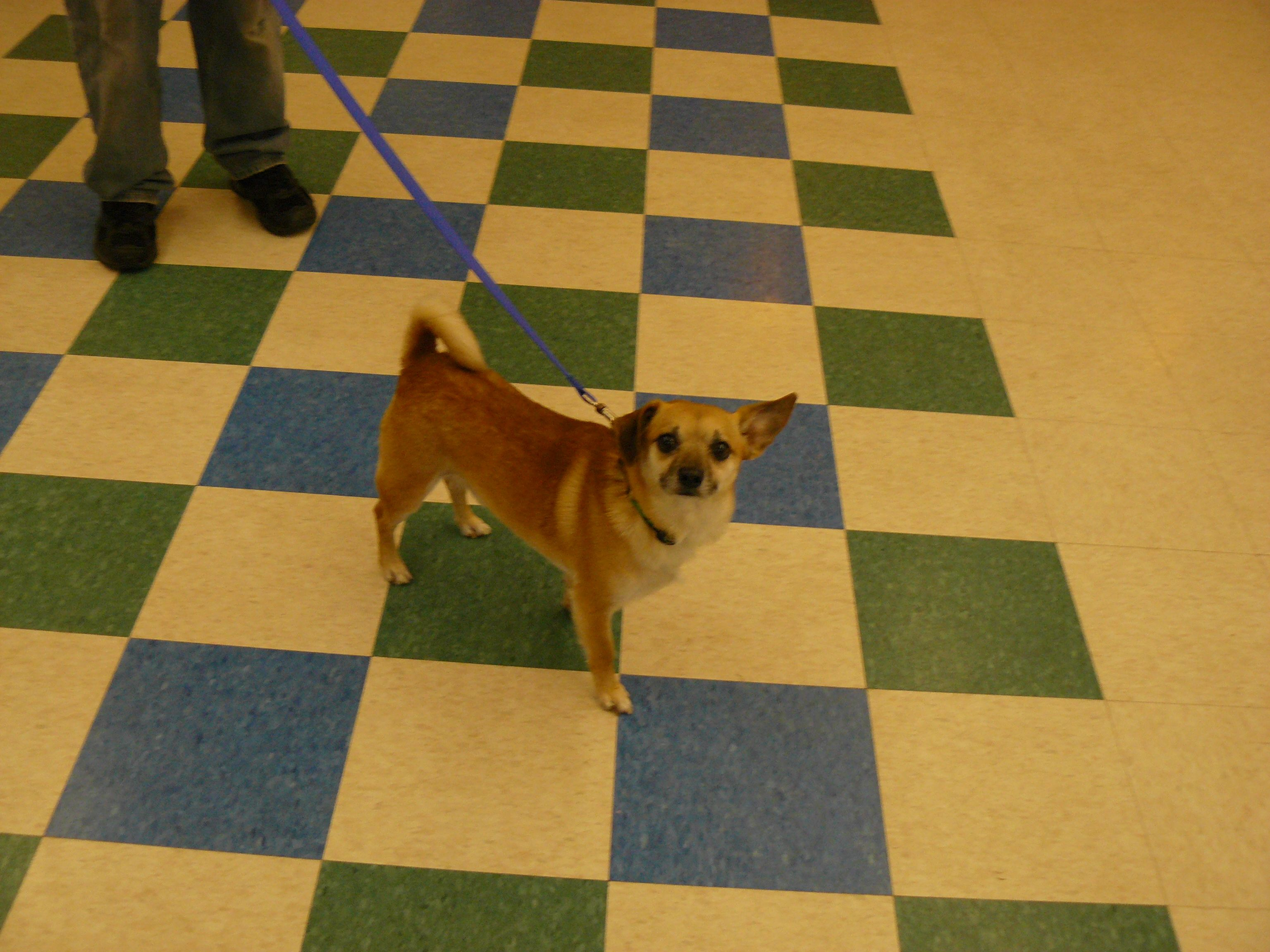 Roy Arlnh Pet Of The Week For July 27 August 2 2014 Check Out His Bio Http Www Petango Com Adopt Dog Houn Animal Rescue League Dog Adoption Animal Rescue