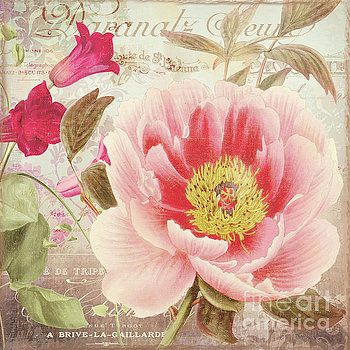 Aphrodite Peony by Mindy Sommers