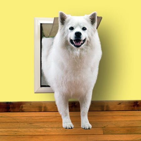 Easy To Install Wall Mount Dog Doors And Cat Doors At Best Prices Dog Door Pet Doors Pets