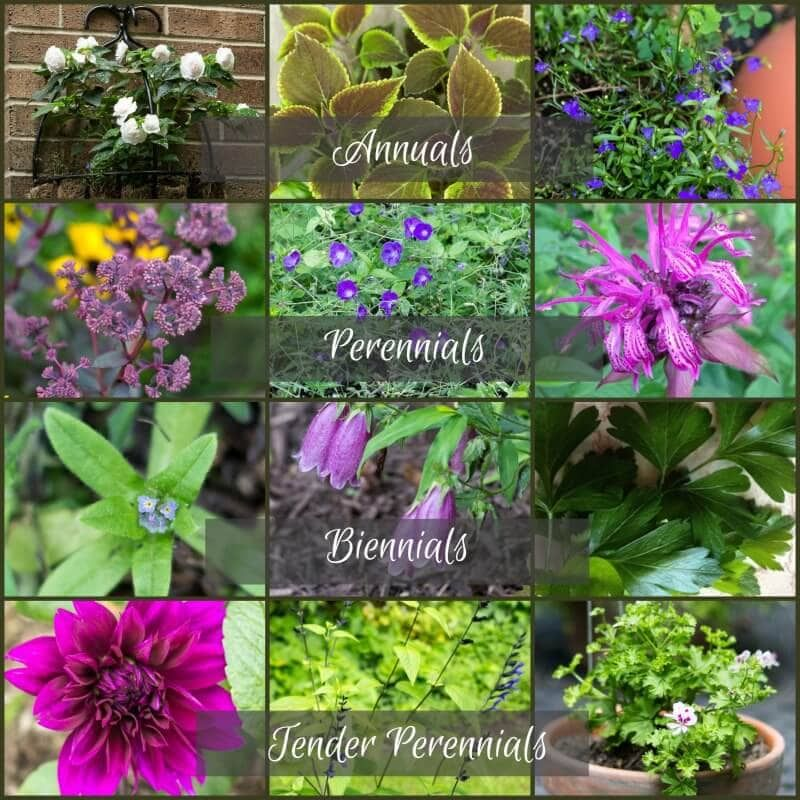 Plant Life Cycles Annuals Vs Perennials And More Annual Plants