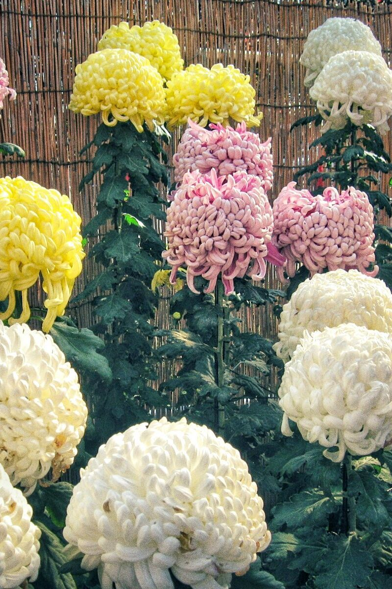 55 Types Of Flowers You Should Have In Your Garden Landscape