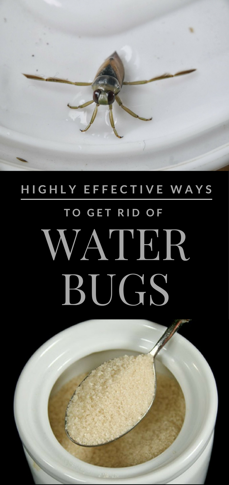 Highly Effective Ways To Get Rid Of Water Bugs Ncleaningtips Com