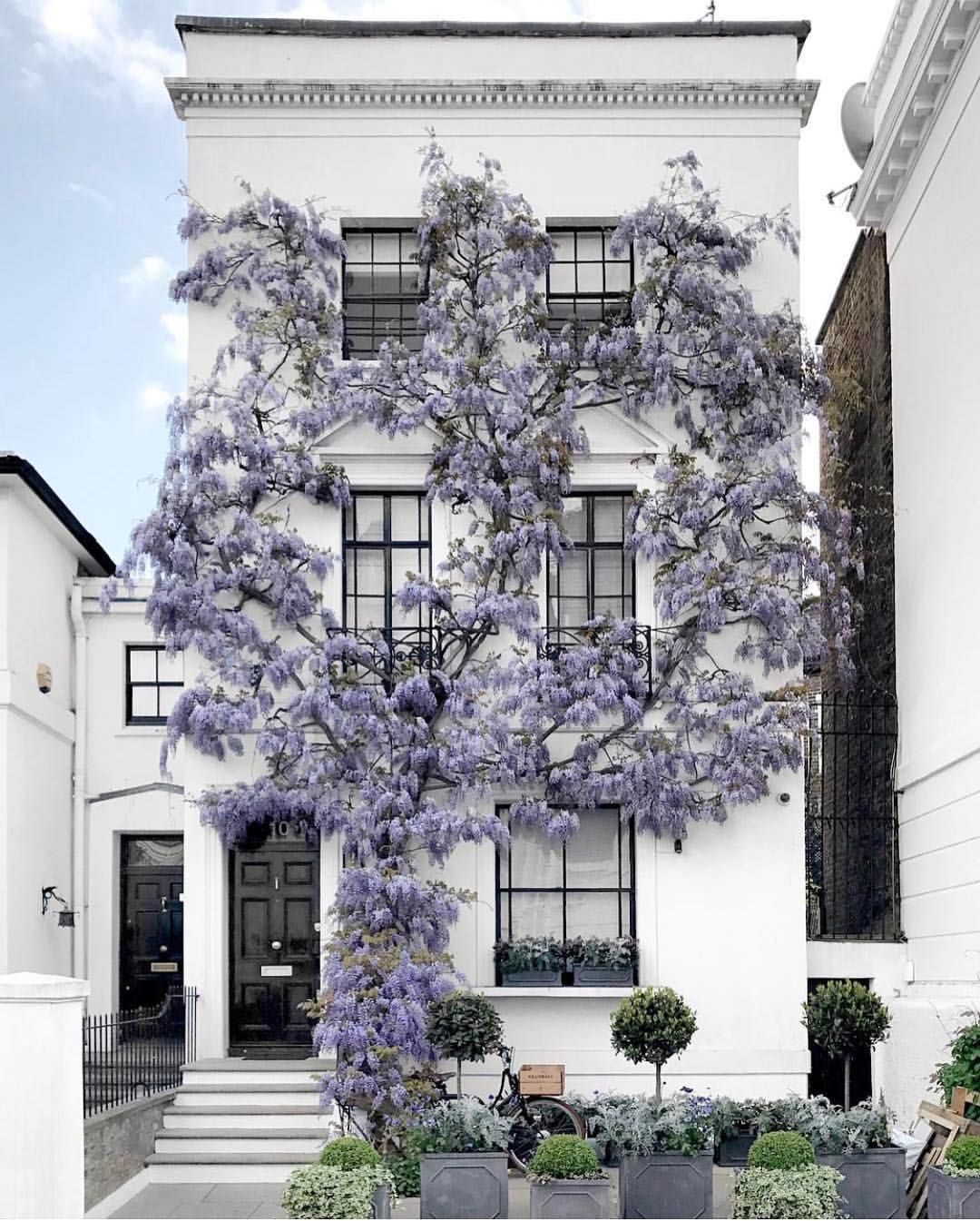Kensingnton, London #wisteria | House Exteriors | Pinterest ...