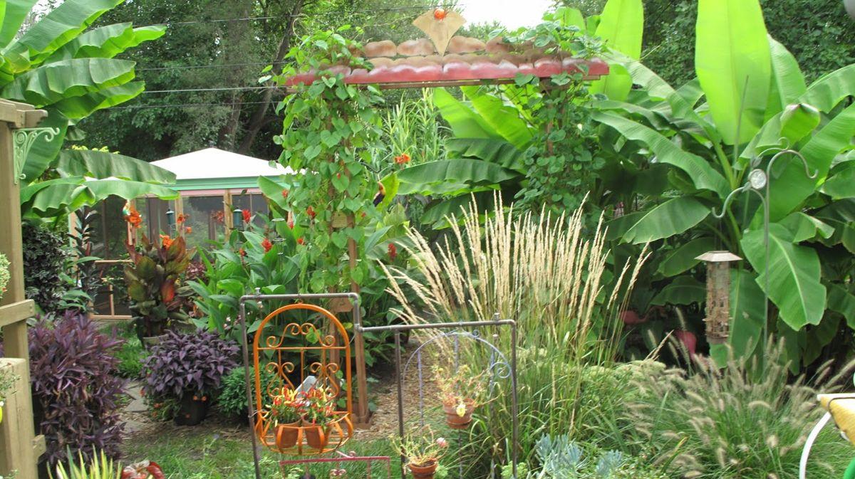 Bill S Tropical Garden In Ohio Tropical Garden Design Garden Design Images Small Tropical Gardens