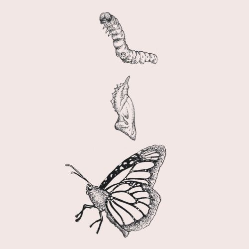 Caterpillar To Butterfly Transformation Drawing Google Search Caterpillar Tattoo Metamorphosis Tattoo Butterfly Transformation