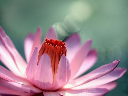 Water Lily Wallpaper Set Is An Excellent Quality Photo Of With Fantastic Depth Field The Download Contains Various Resolutions
