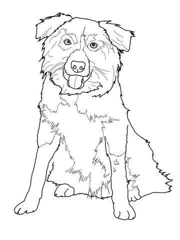 Border Collie Coloring Page Dog Coloring Page Dog Coloring Book
