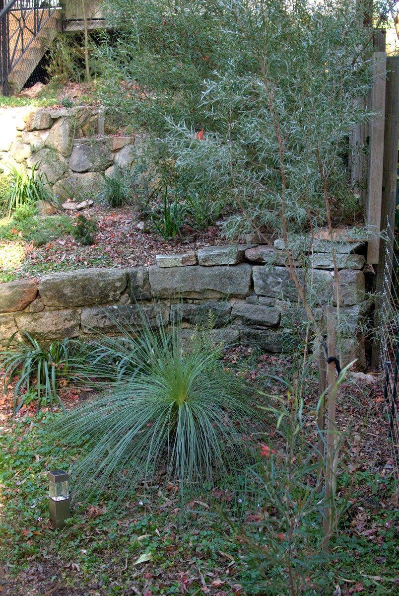 Portfolio Garden Design Hunters Hill Update Garden Plants Design Australian Native Garden Garden Design