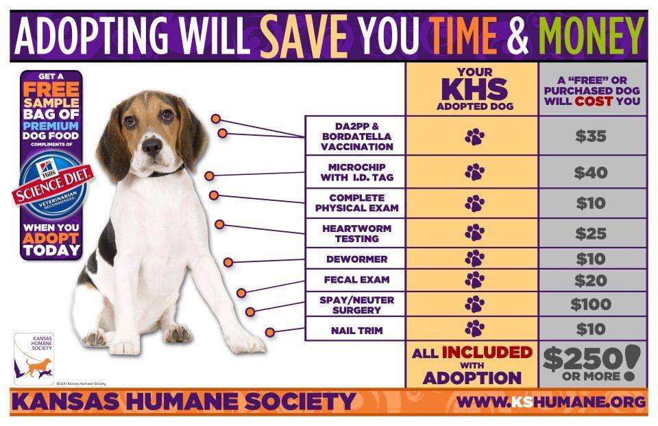 Blog Dogs Animal Shelter Adoption Pet Helpers