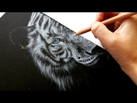 how to draw white fur on black paper colored pencil leontine van