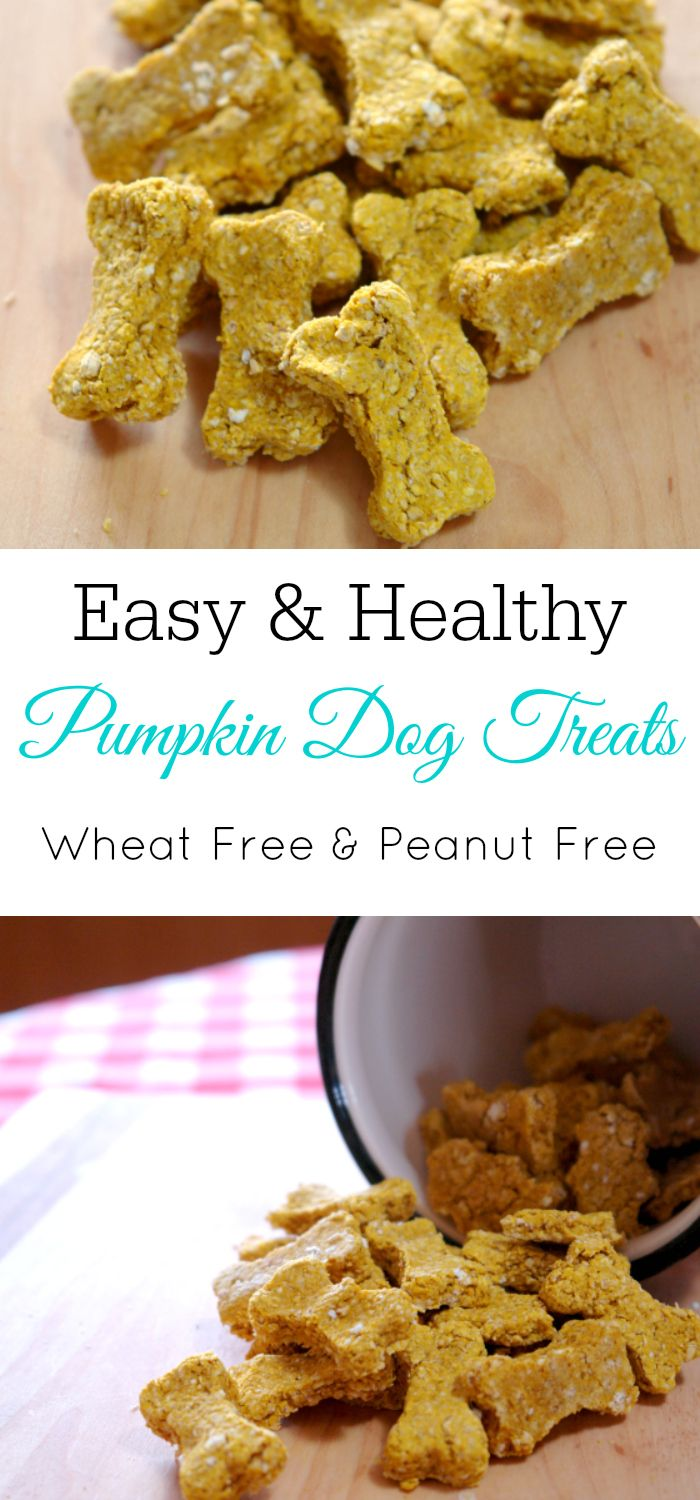 Homemade Pumpkin Dog Treats Dog Biscuit Recipes Homemade Dog