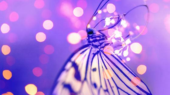 ドイツで 昆虫保護法計画 が発表される 夜間の強力な照明を使用禁止にして昆虫を保護する試み gigazine 照明 電灯 熱帯雨林