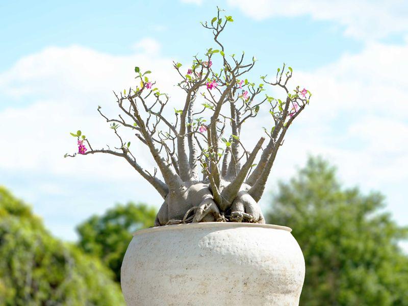 植物の魅力再発見プラントハンター西畠清順によるウルトラな植物園が銀座に出現