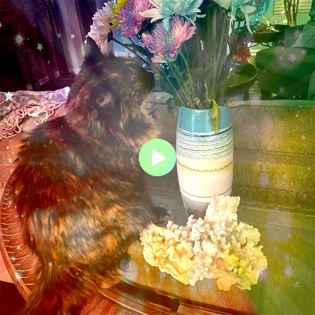checking out the flowers my honey bought me Instagram BridgeShes checking out the flowers my honey bought meShes checking out the flowers my honey bought me Instagram Bri...