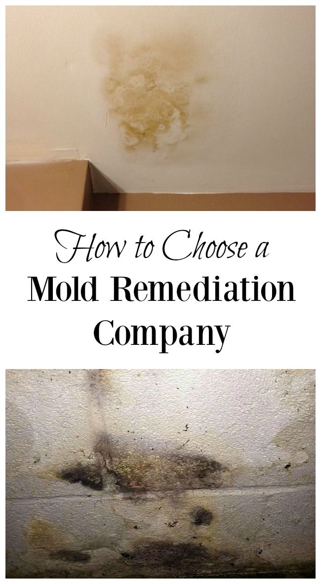 Not All Mold Experts Understand The Health Hazards Of Toxic Ask These 8 Questions Before Choosing A Remediation Company