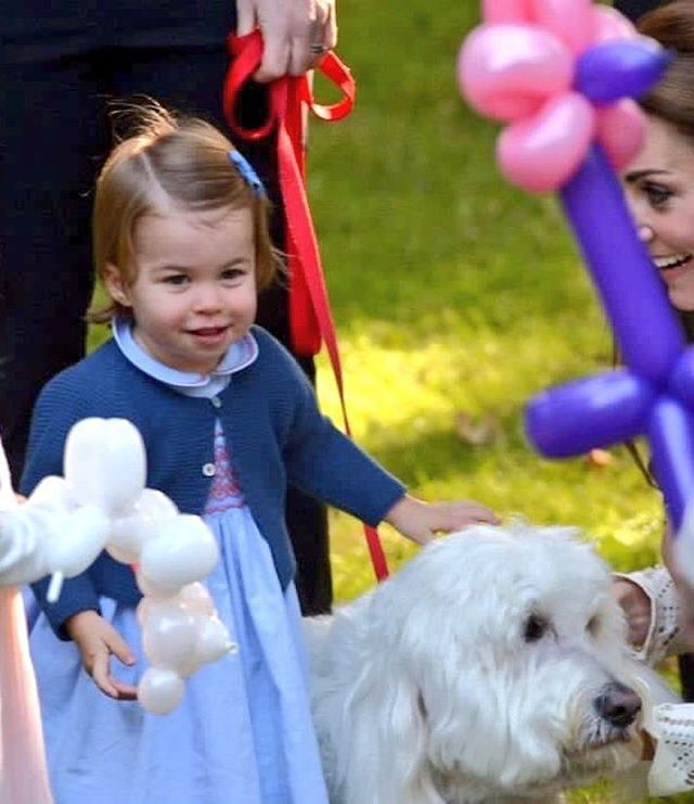 Charlotte sat on this dog several times.  . . . #princesscharlotte #royaltour #royaltourcanada2016 #ohcanada #katemiddleton #duchessofcambridge