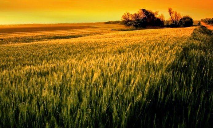 Download 88 Background Kuning Indah HD Paling Keren