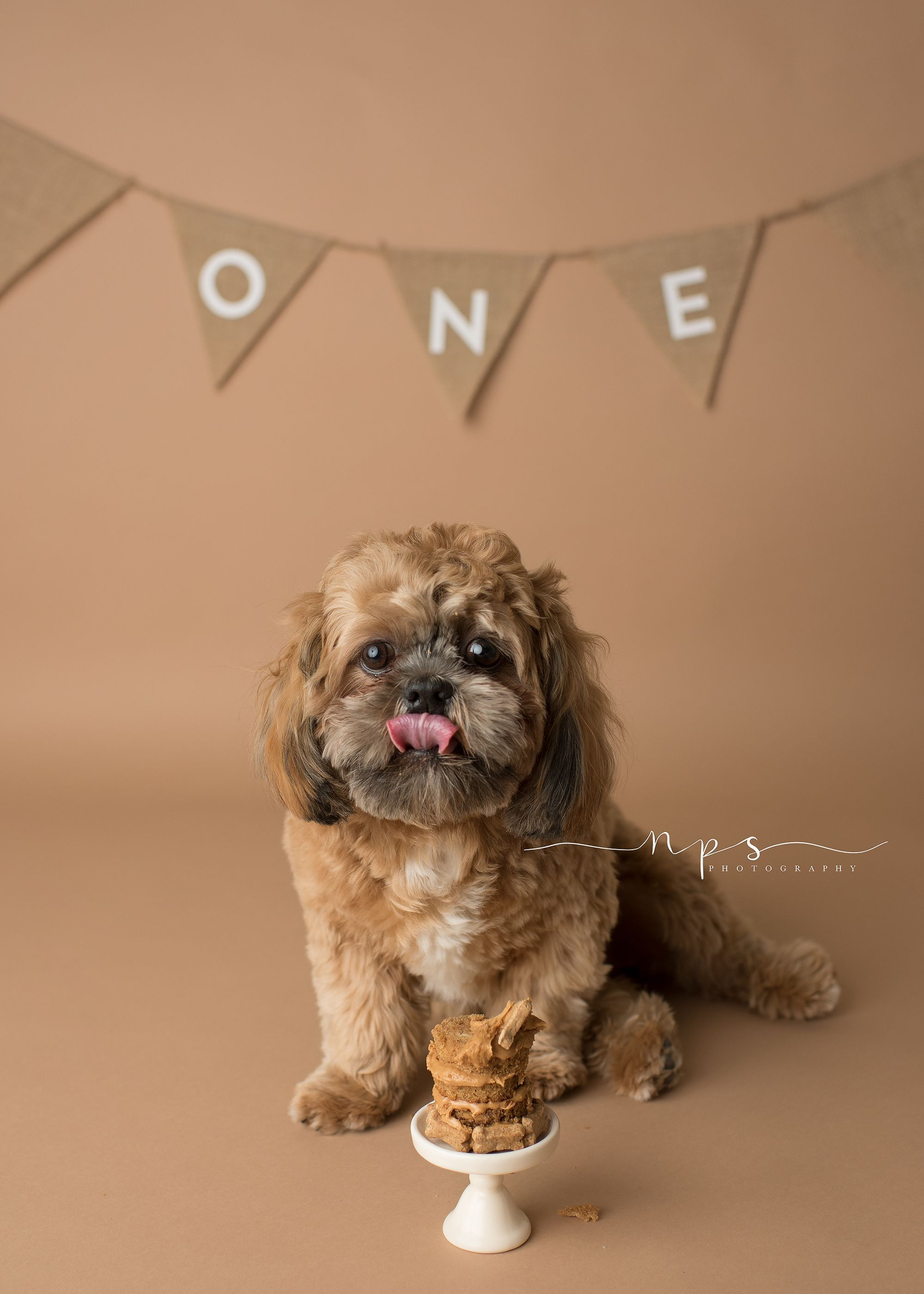 Puppy Cake Smash Our furry family member turns ONE and we celebrated with a Cake Smash in my Pinehurst studio A few pet photography tips from a Pinehurst Photographer