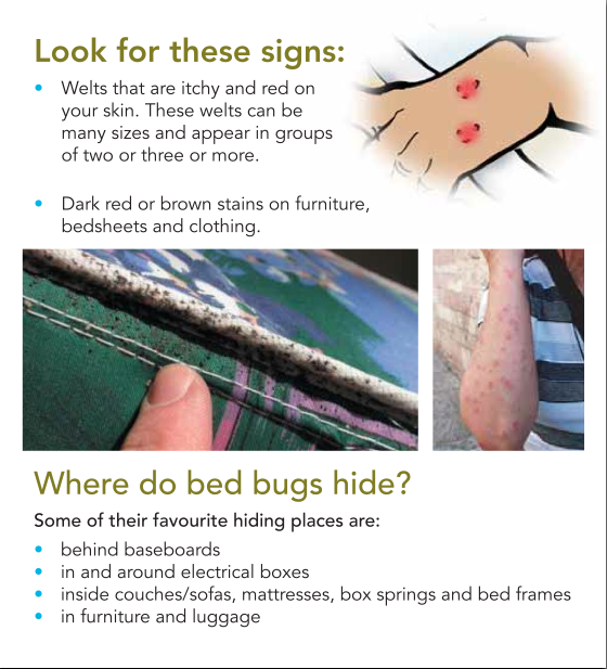 Bed Bugs When You Travel Your Luggage And Clothing May Have Been Exposed You May Need To Discard Them Traveling By Yourself Moving To Florida Visit Florida