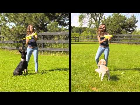 Hyper Pet Durable Dog Toys   Patented Pet Products for all Dogs