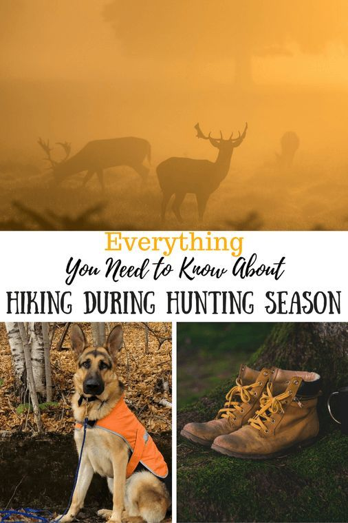 Everything You Need To Know About Hiking During Hunting Season Hiking Hunting Hunting Season