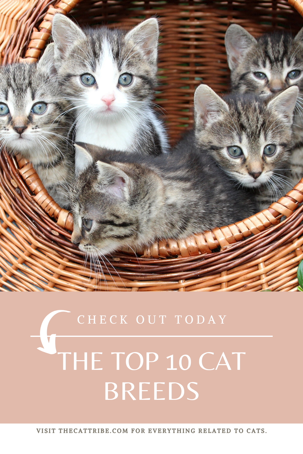 Check The Top 10 Cat Breeds, 7 Is So Cute! The Cat