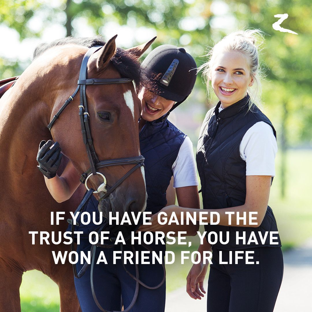 Pics photos quote i wrote for my horse com account s equestrian - Horse Quotes If You Have Gained The Trust Of A Horse You Have