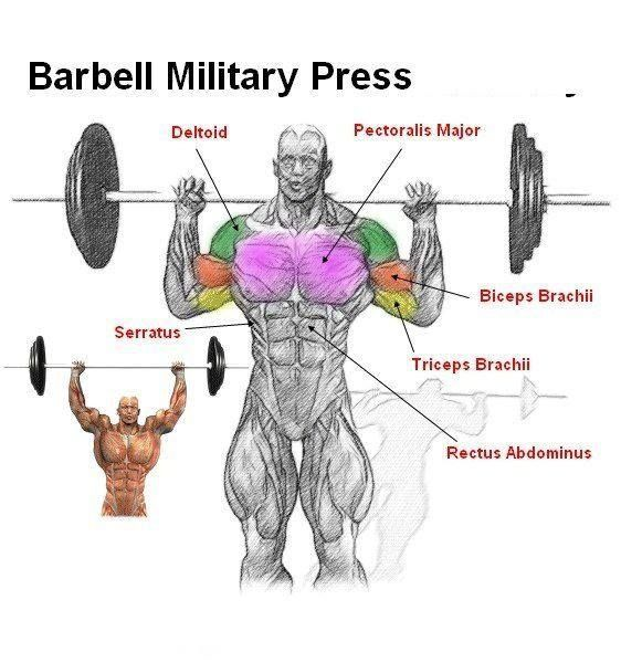 Barbell Military Press Standing Barbell Shoulder Press Anatomy Gym