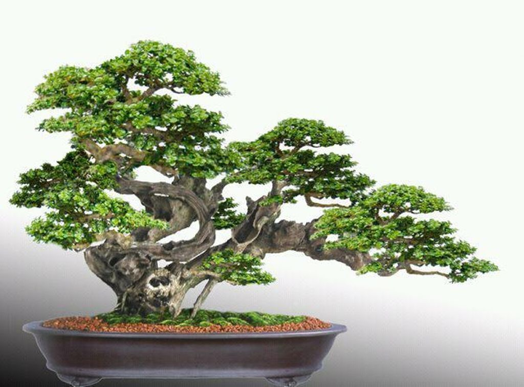 20+ Stunning Bonsai Plant Design Ideas For Garden #bonsaiplants - One of the ancient plants that are used for decoration in both the indoors and outdoors are bonsai plants. These particular trees are known for their ... #bonsaiplants